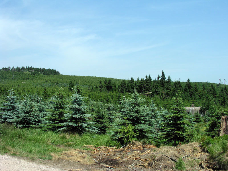 Charakteristika lesní správy Rychnov nad Kněžnou